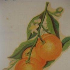 Pegatinas de colección: CALCOMANIA DE FRUTA 14 X 9,50 CM - PORTAL DEL COL·LECCIONISTA *****. Lote 182985877