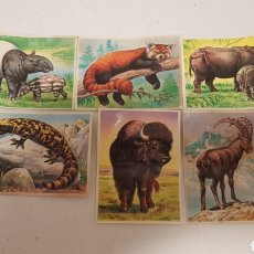 Pegatinas de colección: BOLLYCAO FAUNA EN PELIGRO 5 CROMOS. Lote 222392965