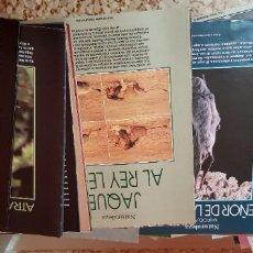 Coleccionismo de Periódico El País: LOTE 27 SUPLEMENTOS Y FASCÍCULOS COLECCIONABLES - NATURALEZA Y ANIMALES - EL PAÍS. Lote 212555356