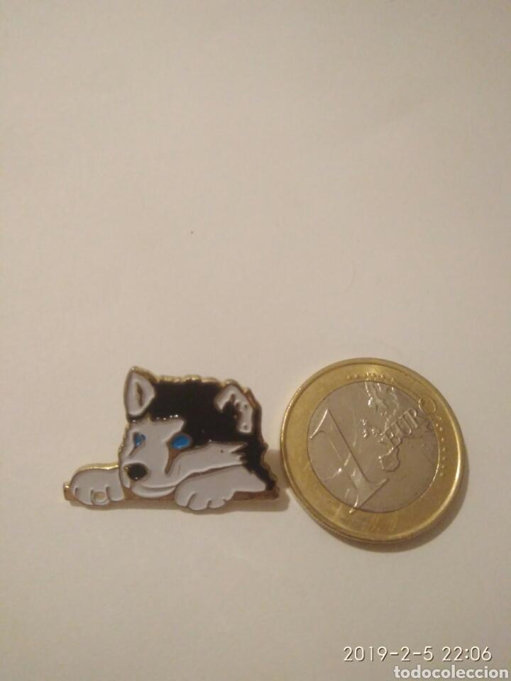 5fac5e64a PIN/PINS PERRO HUSKY SIBERIANO O ALASKA MALAMUTE (Coleccionismo - Pins)