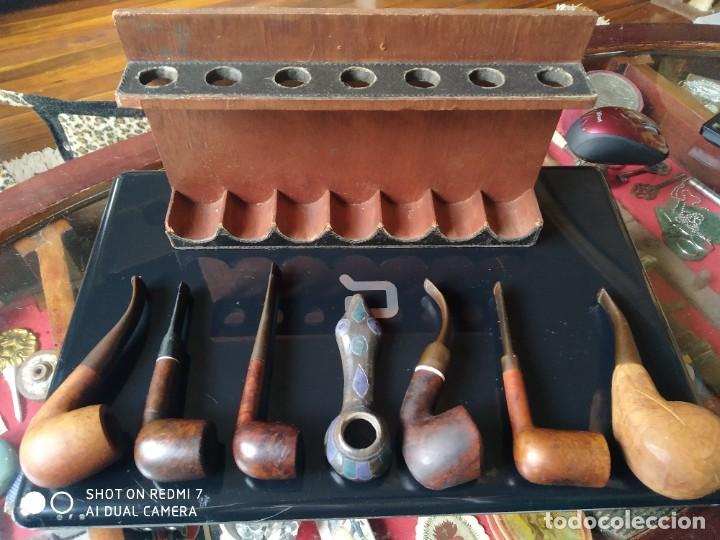 Pipas de fumar: Expositor con 7 pipas - Foto 3 - 237865500