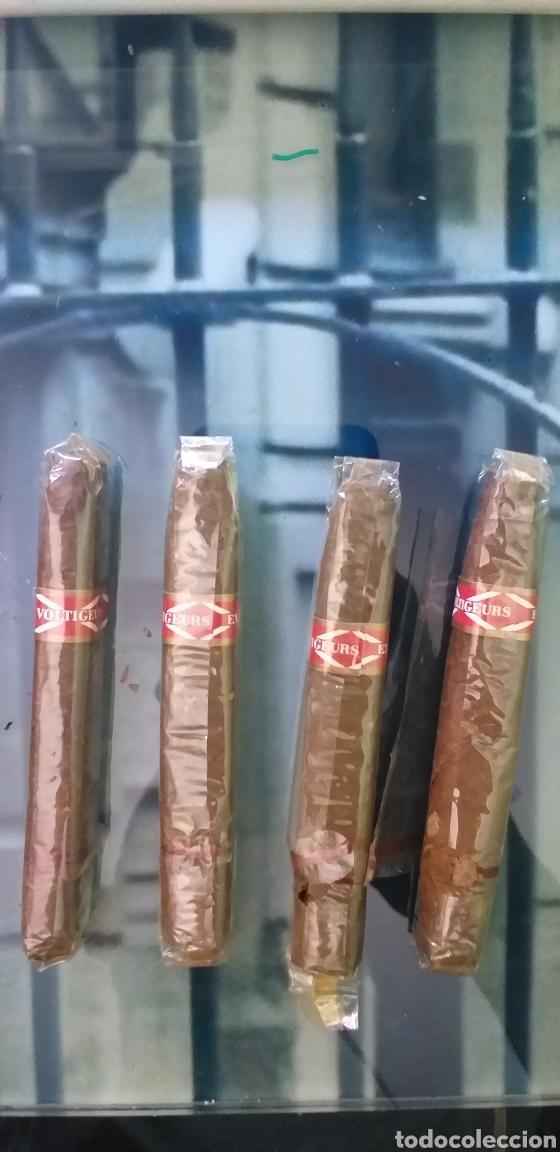 LOTE DE ANTIGUOS PUROS VARIAS MARCAS (Coleccionismo - Objetos para Fumar - Cajas de Puros)