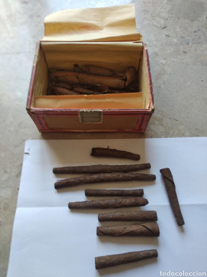 Cajas de Puros: Caja de puros Farias - Foto 3 - 166908373