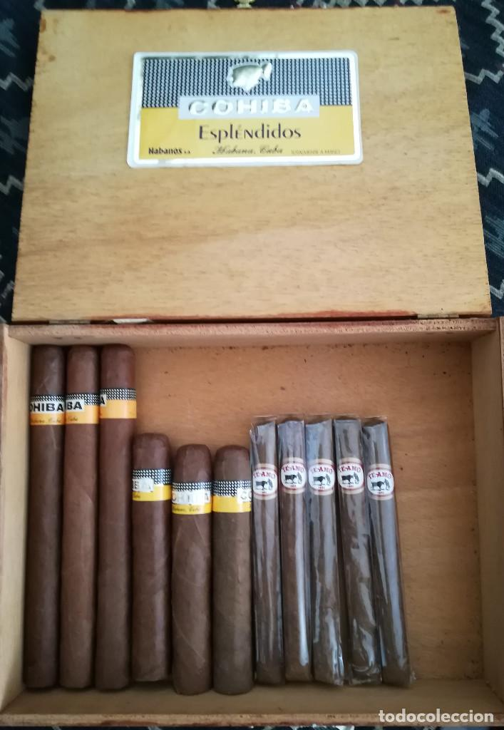 LOTE PUROS COHIBA CUBA,3 ROBUSTOS+3 ESPLENDIDOS+5 TE AMO N.7 MÉXICO+ CAJA VACÍA DE ESPLEDIDOS (Coleccionismo - Objetos para Fumar - Cajas de Puros)