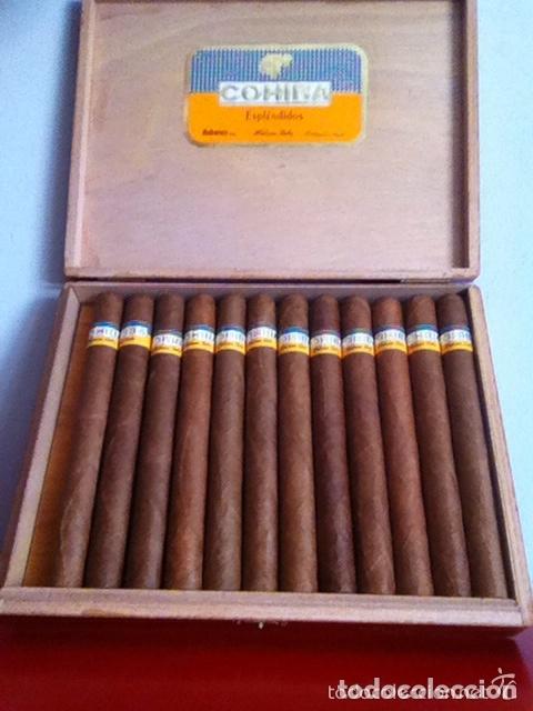 COHIBA ESPLÉNDIDOS - CAJA 23 UNIDADES- PUROS HABANOS (17,8 CM) (Coleccionismo - Objetos para Fumar - Cajas de Puros)
