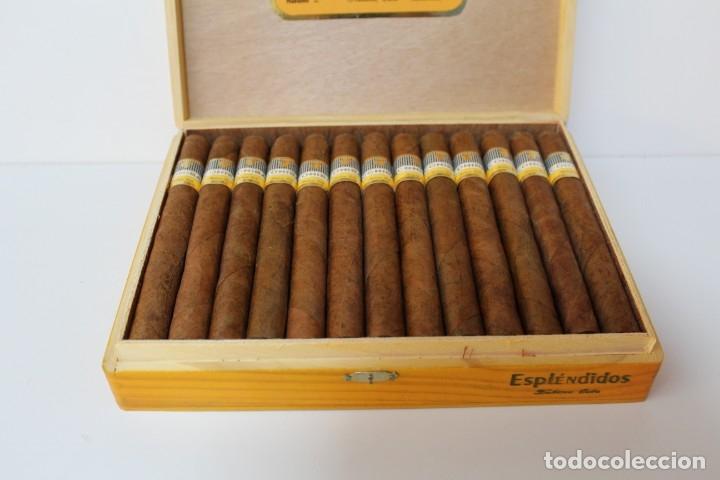 Cajas de Puros: CAJA DE PUROS COMPLETA - COHIBA ESPLENDIDOS - Foto 4 - 175110905