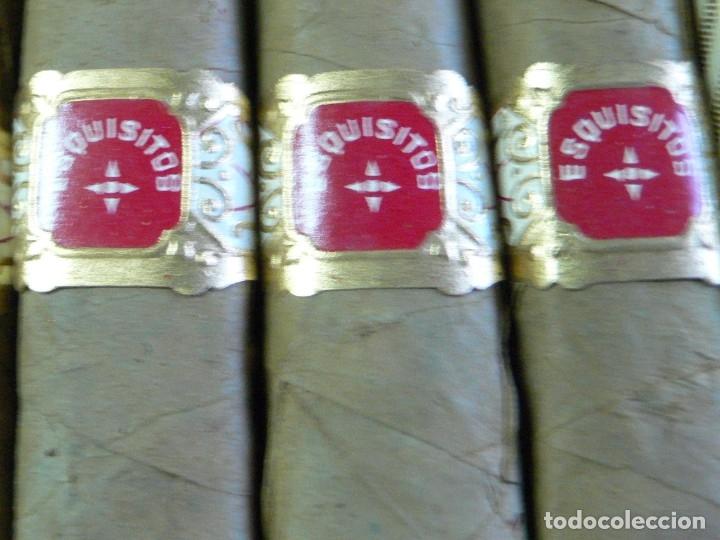 Cajas de Puros: ANTIGUA CAJA PUROS RITTER DANK MACHSTUM: SUMATRA - Foto 6 - 178051702