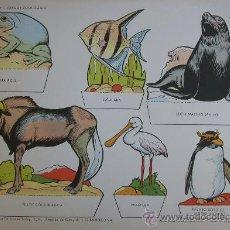 Coleccionismo Recortables: RECORTABLES TORAY - PARQUE ZOOLOGICO Nº 96 - ORIGINAL 1962. Lote 27104196