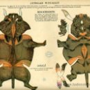 Coleccionismo Recortables: RECORTABLE ANIMALES PLEGABLES , EDICIONES TIJERA , RINOCERONTE Y JABALI , R 45. Lote 46535331