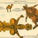 Coleccionismo Recortables: RECORTABLE ANIMALES PLEGABLES , EDICIONES TIJERA , CAMELLO Y CANGURO , R 49. Lote 46535327