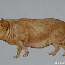 Coleccionismo Recortables: (M) EL CERDO NUM 7 , SUCESORES DE HERNANDO , MADRID , ANIMALES MOVIBLES , 25 X 13 CM. Lote 67952341