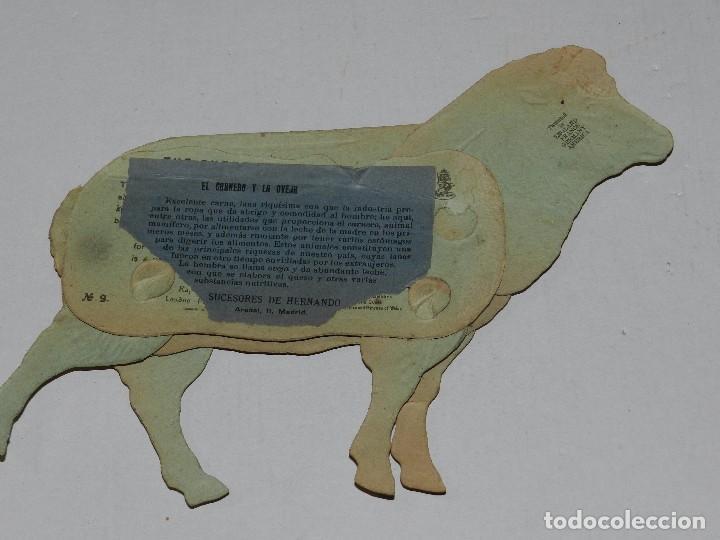 Coleccionismo Recortables: (M) EL CARNERO Y LA OVEJA NUM 9 , SUCESORES DE HERNANDO , MADRID , ANIMALES MOVIBLES , 25 X 18 CM - Foto 2 - 67952673