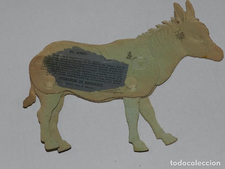 Coleccionismo Recortables: (M) EL ASNO NUM 5 , SUCESORES DE HERNANDO , MADRID , ANIMALES MOVIBLES , 25 X 18 CM - Foto 2 - 67952861