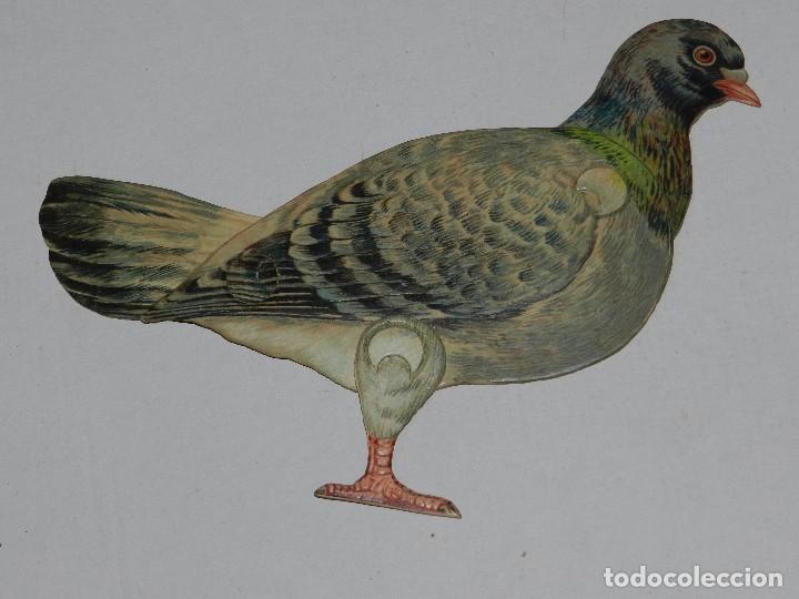 (M) EL PAJARO , RAPHAEL TUCK & SONG, LONDON , ANIMALES MOVIBLES , 25 X 18 CM (Coleccionismo - Recortables - Animales)