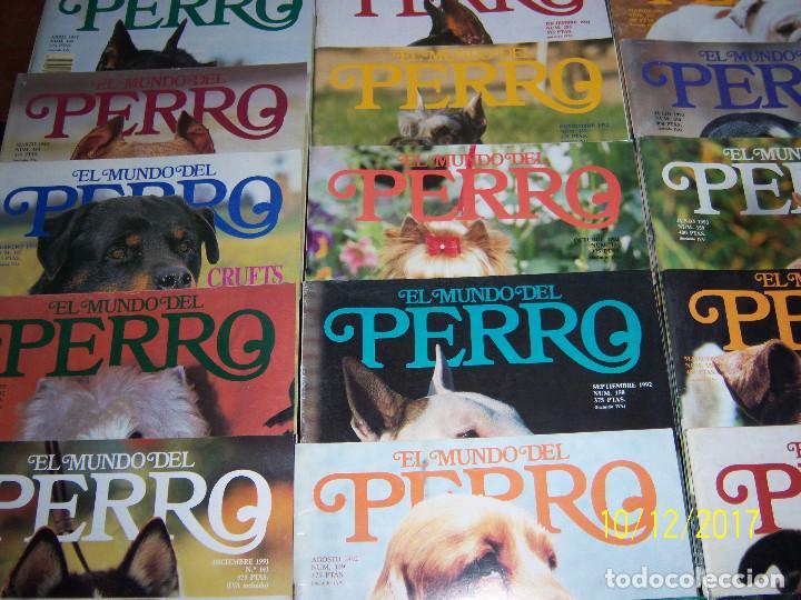 Coleccionismo Recortables: EL MUNDO DEL PERRO,49 Ejempl..,Nov-91 Nº140 -Nov-95 Nº188,Falta Nº166.Ejemplares sueltos 1,50 Euros. - Foto 4 - 100225963