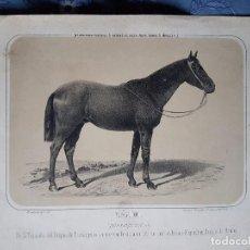 Coleccionismo Recortables: GRABADO DEL CABALLO RÁPIDO (PURA SANGRE INGLESA) DUQUE DE OSUNA.. Lote 103671207