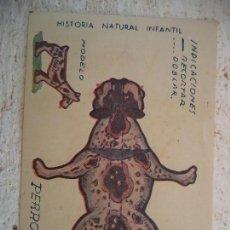 Coleccionismo Recortables: CROMO HISTORIA NATURAL INFANTIL.SERIE A.ANIMALES PLEGABLES.PERRO. Lote 107002595