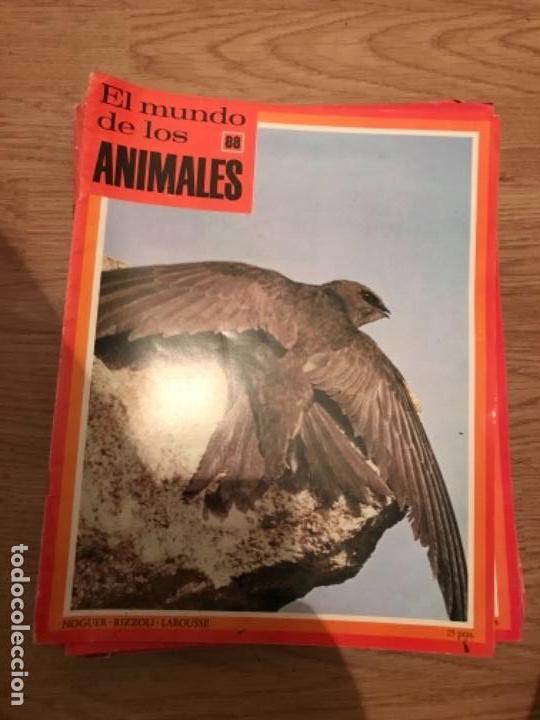 Coleccionismo Recortables: FASCÍCULOS DE LA ENCICLOPEDIA DE LOS ANIMALES - NOGUER / RIZOLLI / LAROUSSE - 1970 - Foto 2 - 107849359