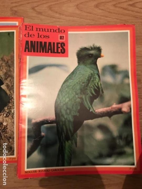 Coleccionismo Recortables: FASCÍCULOS DE LA ENCICLOPEDIA DE LOS ANIMALES - NOGUER / RIZOLLI / LAROUSSE - 1970 - Foto 3 - 107849359