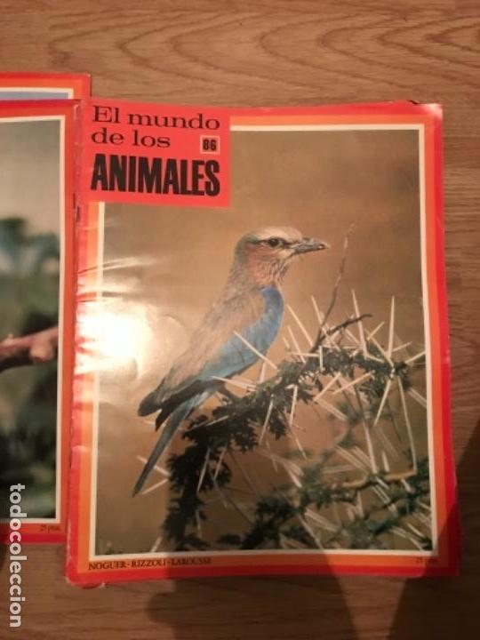 Coleccionismo Recortables: FASCÍCULOS DE LA ENCICLOPEDIA DE LOS ANIMALES - NOGUER / RIZOLLI / LAROUSSE - 1970 - Foto 4 - 107849359
