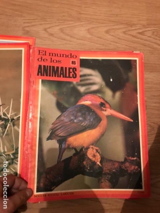 Coleccionismo Recortables: FASCÍCULOS DE LA ENCICLOPEDIA DE LOS ANIMALES - NOGUER / RIZOLLI / LAROUSSE - 1970 - Foto 5 - 107849359