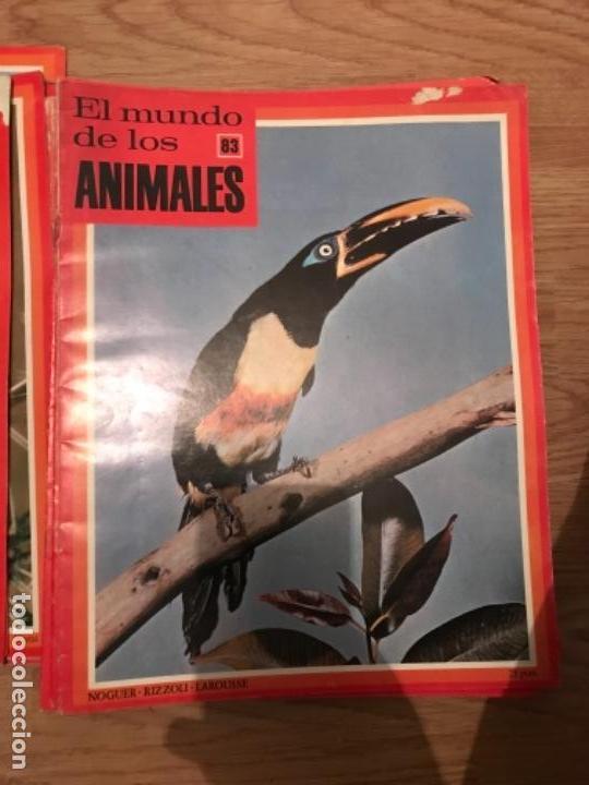 Coleccionismo Recortables: FASCÍCULOS DE LA ENCICLOPEDIA DE LOS ANIMALES - NOGUER / RIZOLLI / LAROUSSE - 1970 - Foto 7 - 107849359