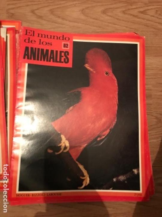 Coleccionismo Recortables: FASCÍCULOS DE LA ENCICLOPEDIA DE LOS ANIMALES - NOGUER / RIZOLLI / LAROUSSE - 1970 - Foto 8 - 107849359