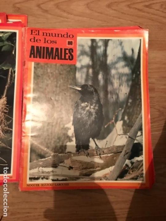 Coleccionismo Recortables: FASCÍCULOS DE LA ENCICLOPEDIA DE LOS ANIMALES - NOGUER / RIZOLLI / LAROUSSE - 1970 - Foto 10 - 107849359