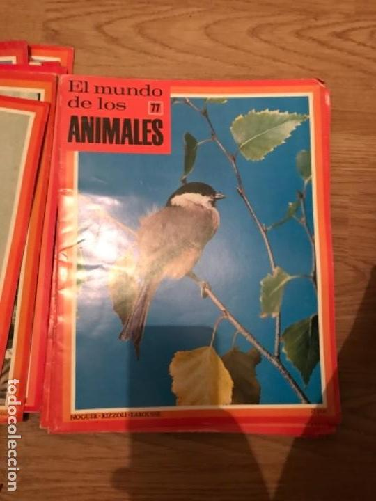 Coleccionismo Recortables: FASCÍCULOS DE LA ENCICLOPEDIA DE LOS ANIMALES - NOGUER / RIZOLLI / LAROUSSE - 1970 - Foto 12 - 107849359