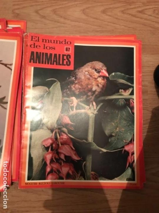 Coleccionismo Recortables: FASCÍCULOS DE LA ENCICLOPEDIA DE LOS ANIMALES - NOGUER / RIZOLLI / LAROUSSE - 1970 - Foto 14 - 107849359