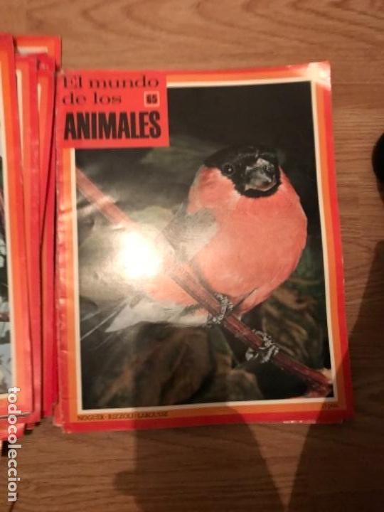 Coleccionismo Recortables: FASCÍCULOS DE LA ENCICLOPEDIA DE LOS ANIMALES - NOGUER / RIZOLLI / LAROUSSE - 1970 - Foto 15 - 107849359