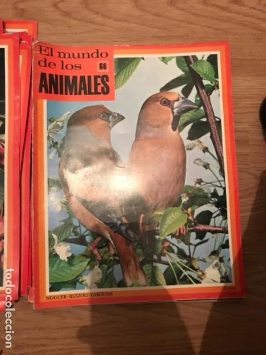 Coleccionismo Recortables: FASCÍCULOS DE LA ENCICLOPEDIA DE LOS ANIMALES - NOGUER / RIZOLLI / LAROUSSE - 1970 - Foto 16 - 107849359