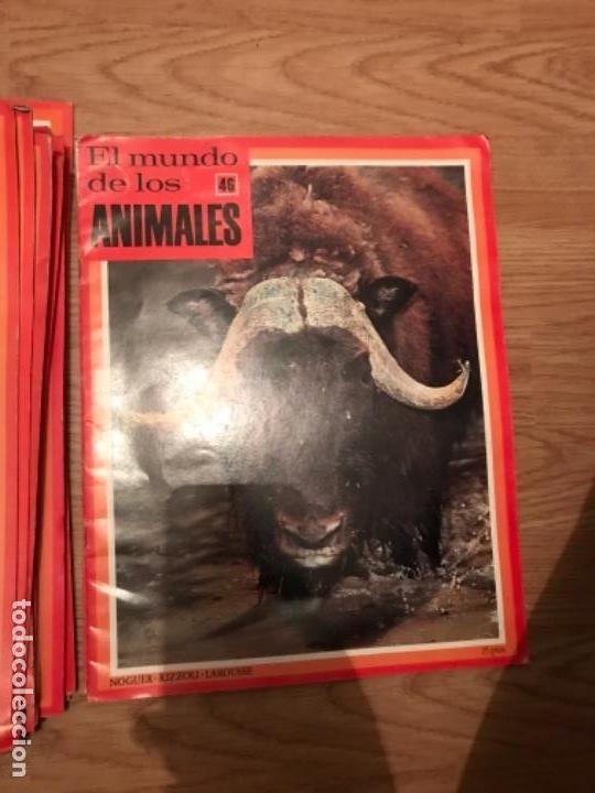 Coleccionismo Recortables: FASCÍCULOS DE LA ENCICLOPEDIA DE LOS ANIMALES - NOGUER / RIZOLLI / LAROUSSE - 1970 - Foto 17 - 107849359