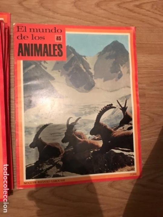 Coleccionismo Recortables: FASCÍCULOS DE LA ENCICLOPEDIA DE LOS ANIMALES - NOGUER / RIZOLLI / LAROUSSE - 1970 - Foto 18 - 107849359