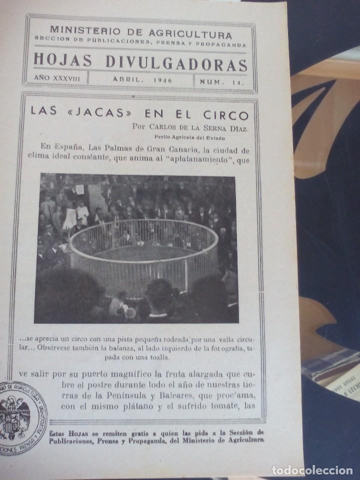 CANARIAS LAS JACAS EN EL CIRCO (Coleccionismo - Recortables - Animales)
