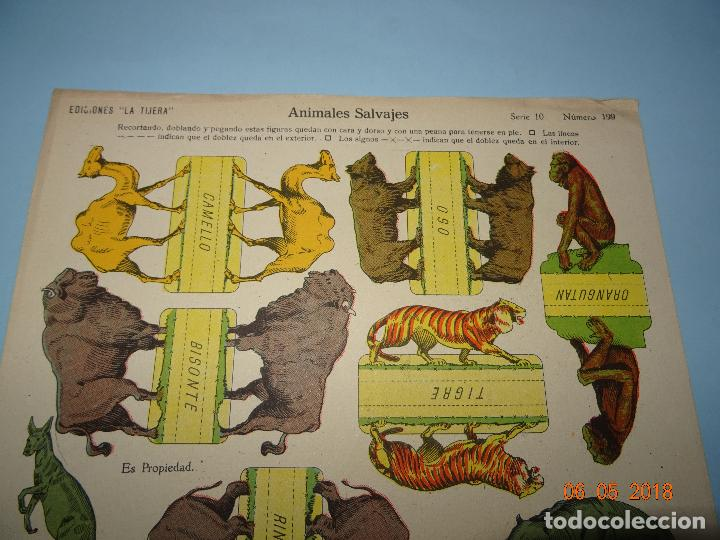 Coleccionismo Recortables: Antigua Lámina ANIMALES SALVAJES Serie 10 Nº 199 Recortable de Ediciones * LA TIJERA * Año 1930s - Foto 2 - 120155455