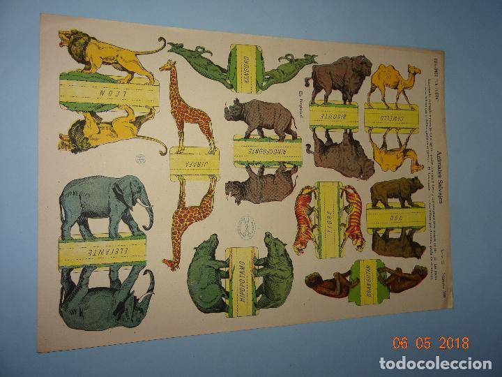 Coleccionismo Recortables: Antigua Lámina ANIMALES SALVAJES Serie 10 Nº 199 Recortable de Ediciones * LA TIJERA * Año 1930s - Foto 3 - 120155455