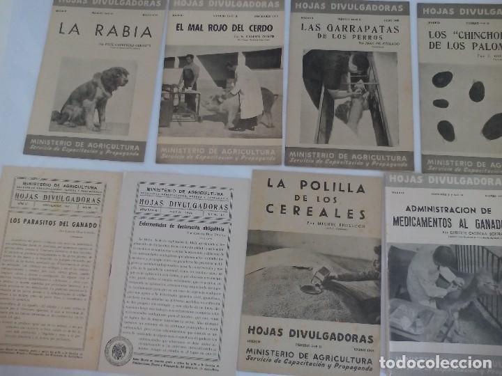HOJAS DIVULGADORAS ENFERMEDADES DE ANIMALES (Coleccionismo - Recortables - Animales)