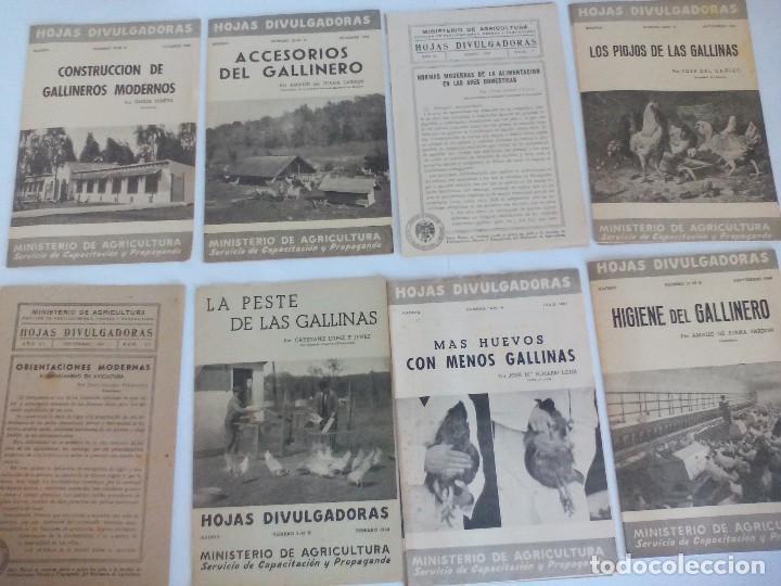 HOJAS DIVULGACIÓN DE AVICULTURA GALLINAS = (Coleccionismo - Recortables - Animales)