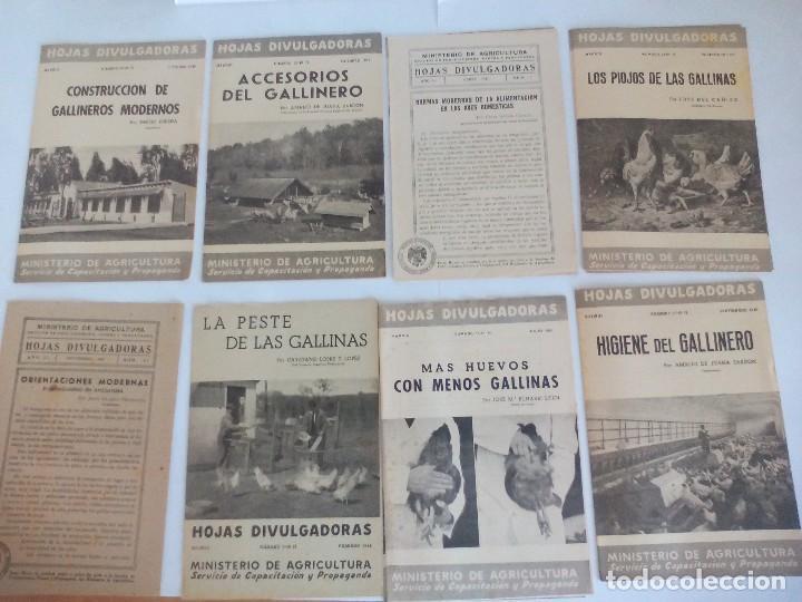 HOJAS DIVULGACIÓN DE AVICULTURA GALLINAS (Coleccionismo - Recortables - Animales)