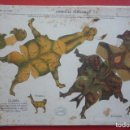 Coleccionismo Recortables: ANIMALES PLEGABLES. 'LLAMA Y BISONTE'. EDICIONES LA TIJERA SERIE 10 Nº 216. TAMAÑO 23X33,5 CM.. Lote 135240970