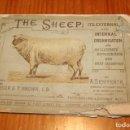 Coleccionismo Recortables: THE SHEEP ANATOMIA ANIMAL. Lote 149587838