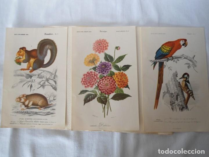 Coleccionismo Recortables: CARPETA OBSEQUIO CON 3 LAMINAS DEL READER·DIGEST AÑOS 70 - Foto 4 - 156464618