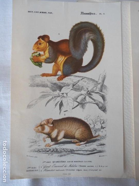 Coleccionismo Recortables: CARPETA OBSEQUIO CON 3 LAMINAS DEL READER·DIGEST AÑOS 70 - Foto 5 - 156464618