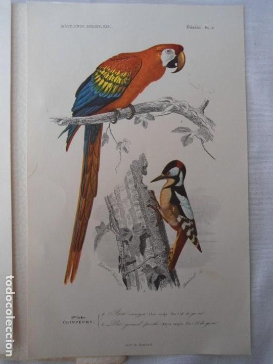 Coleccionismo Recortables: CARPETA OBSEQUIO CON 3 LAMINAS DEL READER·DIGEST AÑOS 70 - Foto 9 - 156464618