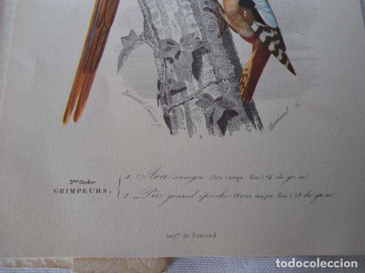 Coleccionismo Recortables: CARPETA OBSEQUIO CON 3 LAMINAS DEL READER·DIGEST AÑOS 70 - Foto 10 - 156464618