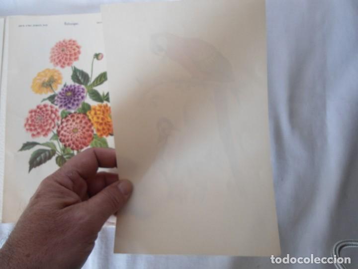 Coleccionismo Recortables: CARPETA OBSEQUIO CON 3 LAMINAS DEL READER·DIGEST AÑOS 70 - Foto 11 - 156464618