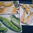 Coleccionismo Recortables: LOTE 3 MAQUETAS DANONE ANIMALES ADENA COCODRILO, CABRA MONTES, Y CANGURO. Lote 156692570