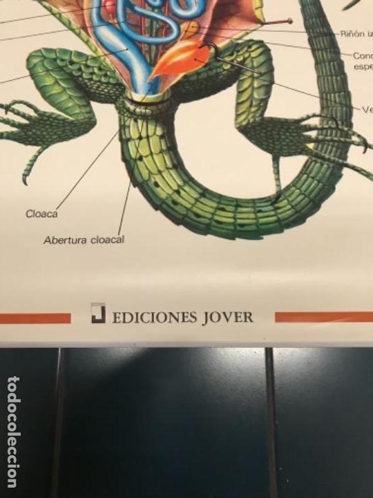 Coleccionismo Recortables: Lagarto, edicciones Jover, año 90 - Foto 2 - 157253930