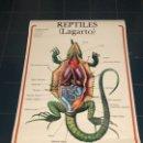 Coleccionismo Recortables: LAGARTO, EDICCIONES JOVER, AÑO 90. Lote 157253930